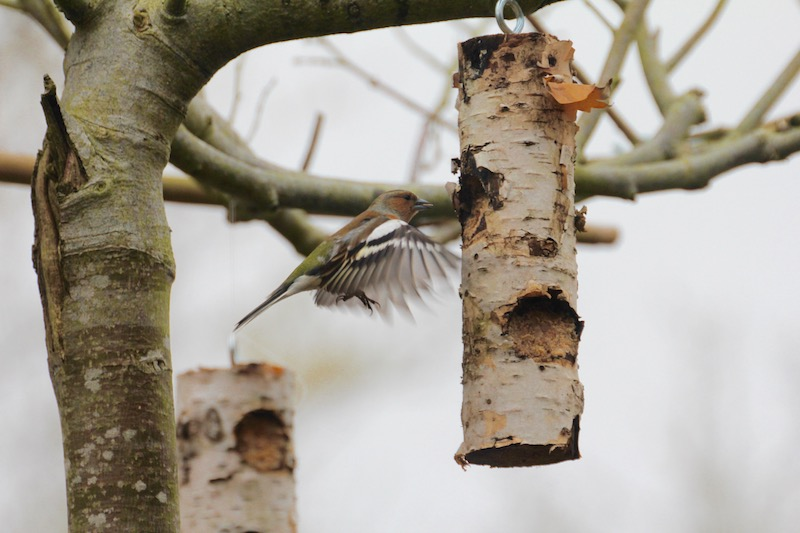 bird in flight with birch bird feeder