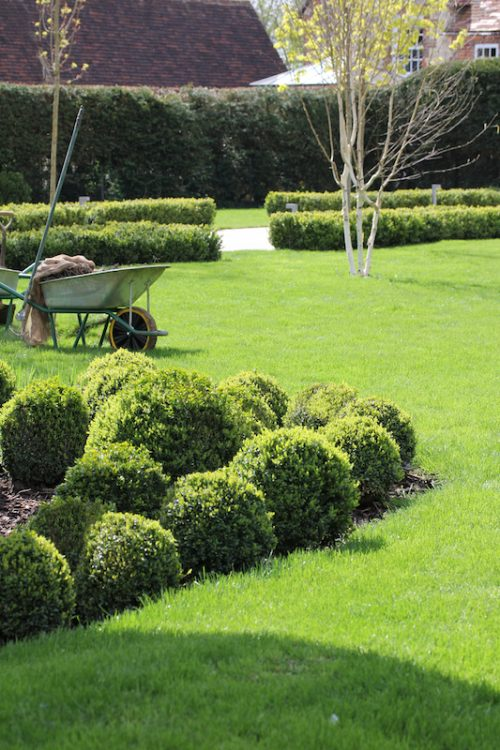 maintained Buxus alls and lawn